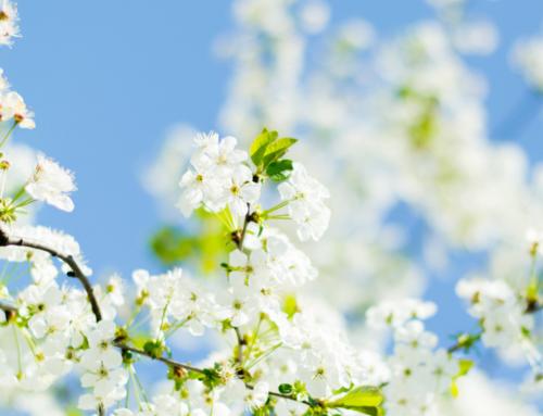 Der Frühling ist endlich da! Jetzt ist genau die richtige Zeit für eine Saftkur!