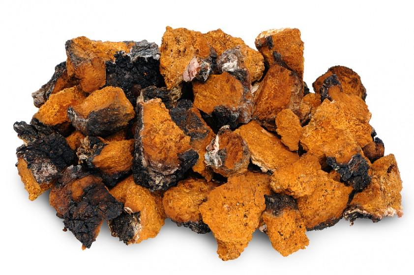bigstock-Chaga-Birch-Mushroom-54410087-842x560